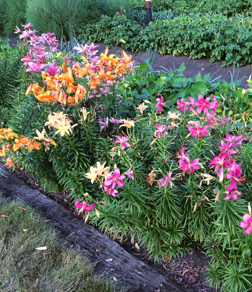 Designing a low maintenance flower garden with perennials doesn't have to be an impossible task.  Here's some ideas for landscaping a flower bed that even a beginner can do. #perennials #garden #flowerbed