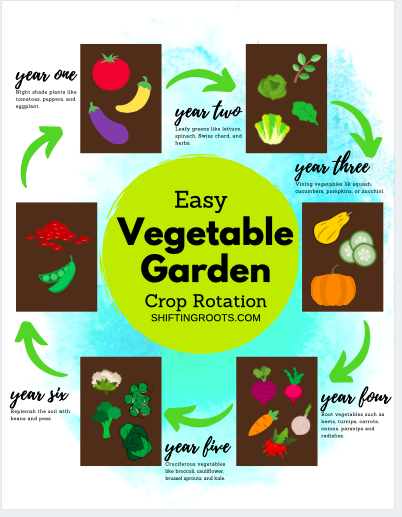 New to garden planning?  Don't miss crop rotation, an essential step in preventing pests, insects, and disease from ruining your vegetable garden. #vegetablegarden #croprotation #gardening #tips #beginners #planning