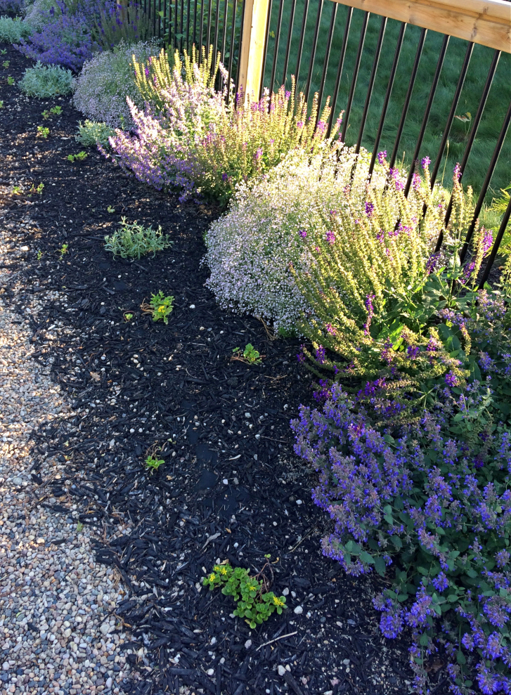 Designing a low maintenance flower garden with perennials doesn't have to be an impossible task.  Here's some ideas for landscaping a flower bed that even a beginner can do--like these beautiful flowers along the fence. #perennials #garden #flowerbed