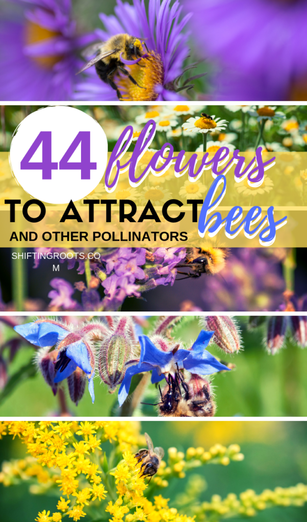 Want to attract bees and other pollinators and beneficial insects to your vegetable garden?  Plant a variety of these 44 annual, perennial, and herb flowers that bees love!  Bonus, all the plants are good for zone 3!! #bees #pollinators #garden #flowers