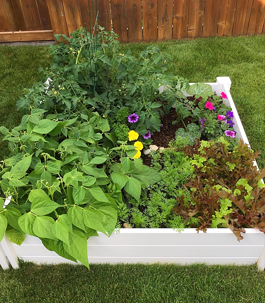 Want to get started square foot gardening?  Here's everything you need to know in a nutshell--raised beds, soil, what vegetables to plant and even some free printable garden plans.