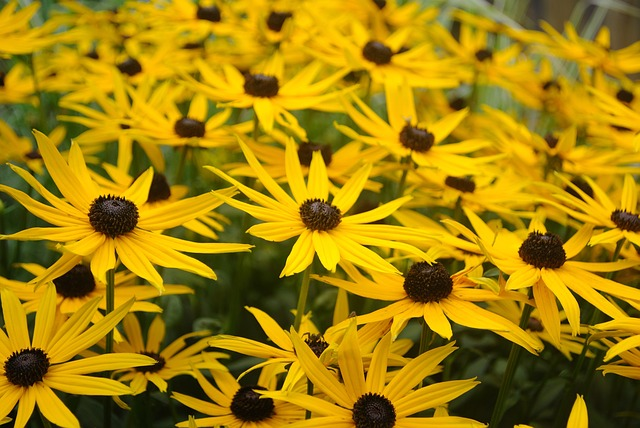 25 Drought Tolerant Native Plants for the Prairies