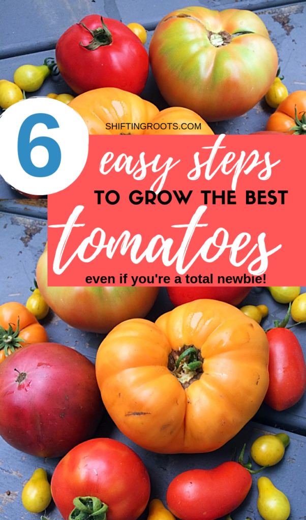 Hey there beginner vegetable gardener--did you know there's a way you can grow the best and biggest tomatoes without a ton of effort?  Just follow these easy 6 tips and tricks for your tomato harvest yet!  Step #2 is key!  #tomato #growing #plant #beginner #best