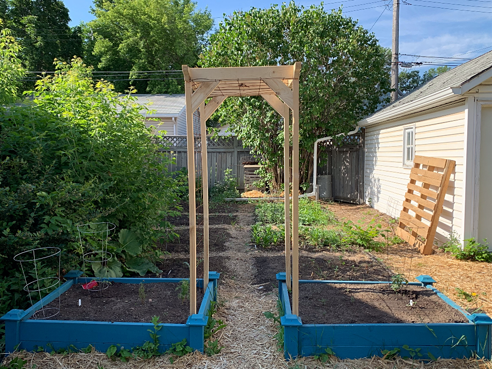 A raised bed garden with a trellis for beans.