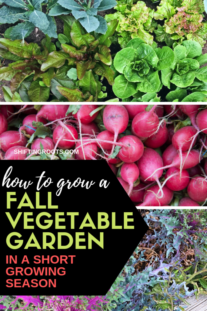 Think you can't grow a fall vegetable garden in a short growing season?  I'll show you how to extend the gardening season into the fall, even if you live somewhere cold.  (I garden in zone 3 in Saskatchewan, Canada!) #garden #fall #tips #ideas #coldclimate