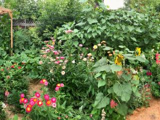 Backyard-Cut-Flower-Garden
