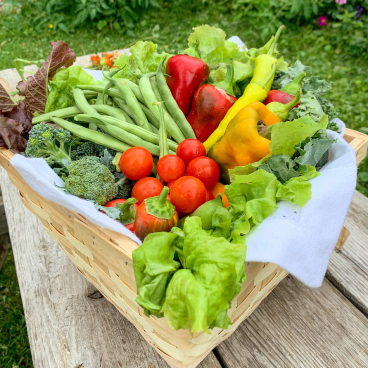 10 Vegetable Gardening Essentials