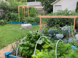 Raised-beds-with-vegetables-in-zone-3-garden