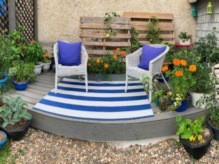 Vegetable-Container-Garden-in-Full-Bloom