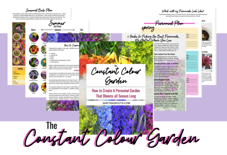 Ever-Blooming Perennial Garden Sales