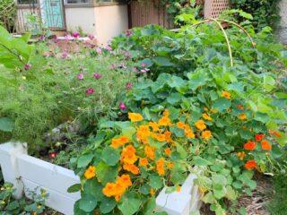 Front-Yard-Raised-Bed-Garden-Zone-3-1