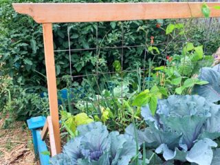 Raised-bed-square-foot-garden-in-zone-3-Canada