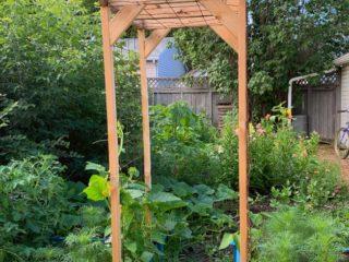 Growing-Raised-Bed-Garden