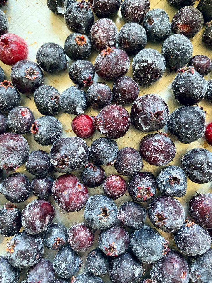 How to Freeze Saskatoon Berries