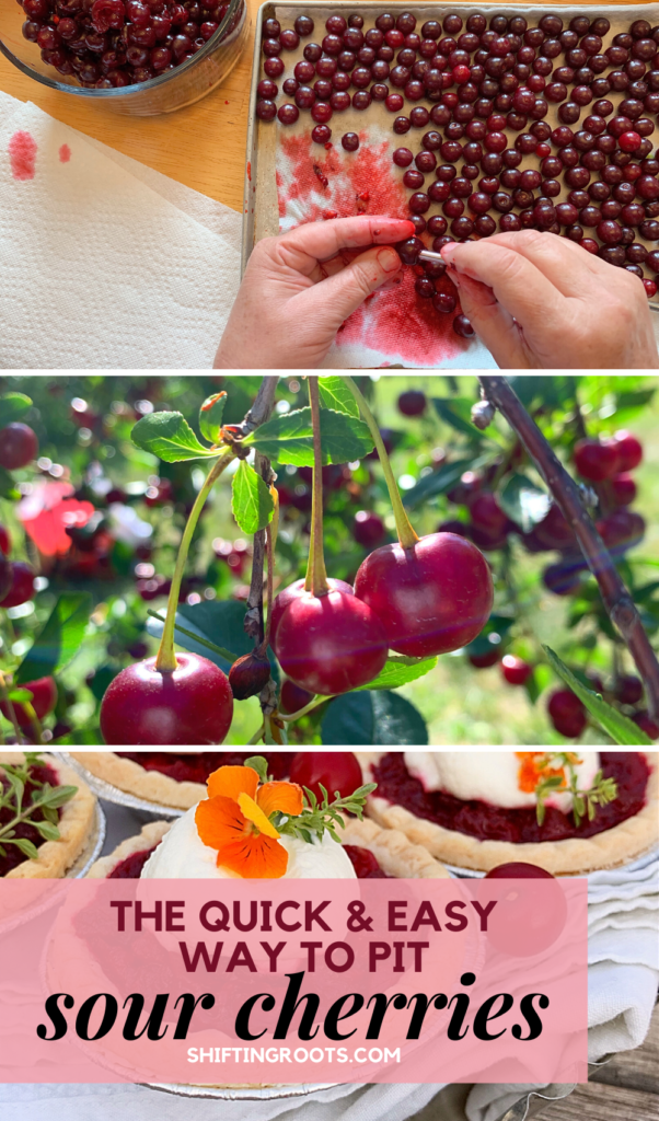 The Best Ways To Pit Sour Cherries Even Without A Cherry Pitter