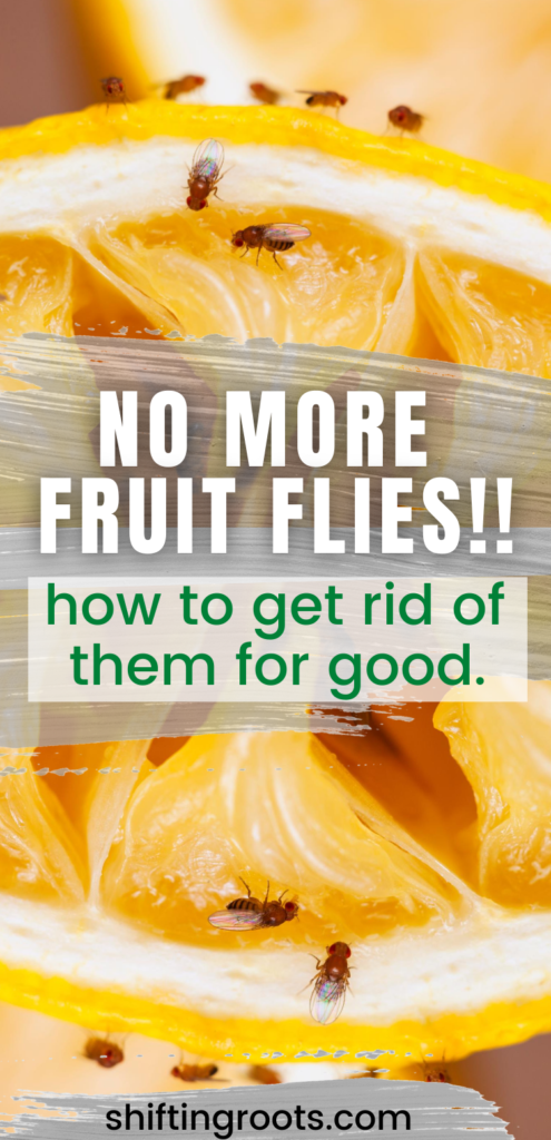 pinterest image for how to get rid of fruit flies.