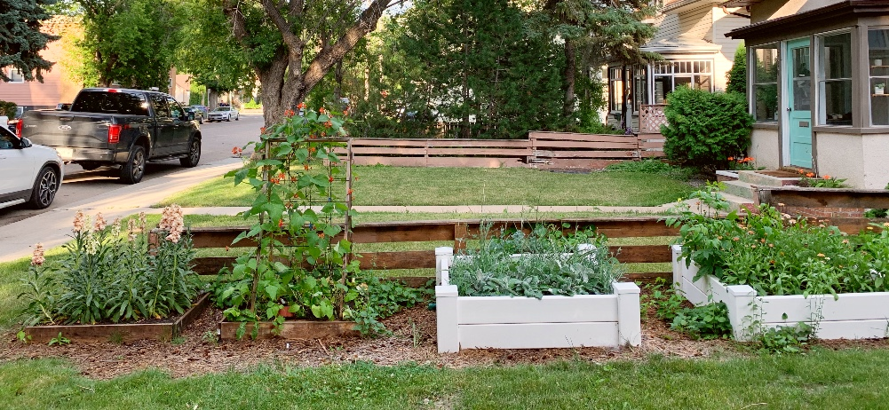 Four raised beds, two wood and two vinyl, with cut flowers growing in them.